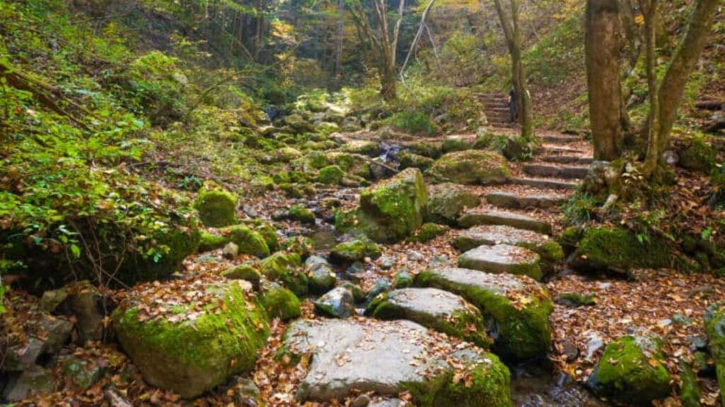 Day Trips from Tokyo Mount Mitake