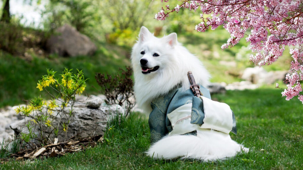 Japanese Culture The Way of the Samurai white dog